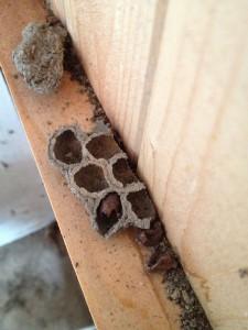 insectenhuisje